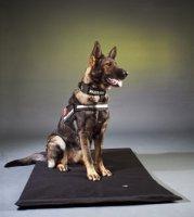 """""""I""""- Gurt 2011-Schutzhund Sicherungssgurt..."""
